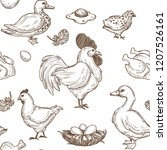 chicken and ducks sketch... | Shutterstock .eps vector #1207526161