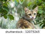 portrait of a cat.. | Shutterstock . vector #12075265