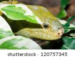 close up of monkey tailed skink ... | Shutterstock . vector #120757345
