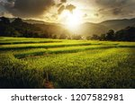 rice field  agriculture farm | Shutterstock . vector #1207582981