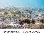 sunbeams underwater rocks and... | Shutterstock . vector #1207590937