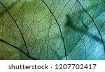 vivid color dry leaf texture... | Shutterstock . vector #1207702417