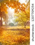 autumnal background of park ... | Shutterstock . vector #1207709254