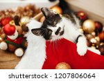 Stock photo cute kitty playing with red and gold baubles in box ornaments and santa hat under christmas tree 1207806064