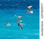 flying seagulls over the surf... | Shutterstock . vector #1207820977