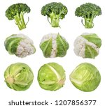 green cabbage broccoli and ... | Shutterstock . vector #1207856377