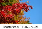 close up  dof  tiny branch with ... | Shutterstock . vector #1207873321