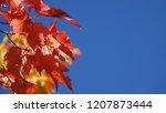 macro  dof  detailed shot of... | Shutterstock . vector #1207873444