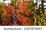 close up  dof  green spruce... | Shutterstock . vector #1207873447