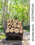 Tree Cut Lumber Industry With...