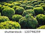 Bux Tree