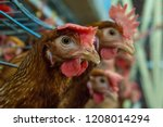 battery cage of layer chickens... | Shutterstock . vector #1208014294