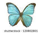 butterfly on white | Shutterstock . vector #120802801