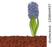mulching of beds  plants  soil...   Shutterstock .eps vector #1208044957