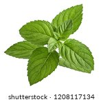mint leaf isolated on white... | Shutterstock . vector #1208117134