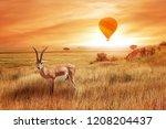 lonely antelope  eudorcas... | Shutterstock . vector #1208204437