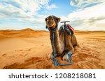 Small photo of Dromedary Camel Sahara Desert Merzouga Morocco