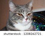 the beautiful gray cat looks... | Shutterstock . vector #1208262721