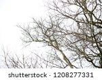 branches of deciduous trees and ... | Shutterstock . vector #1208277331