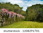 lush landscape of the south of... | Shutterstock . vector #1208291701