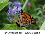 A Monarch Butterfly With...