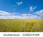 boundless summer field  nd blue ... | Shutterstock . vector #1208319184