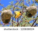 Wild Birds From Africa  ...