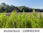 wild flowers along an... | Shutterstock . vector #1208402344