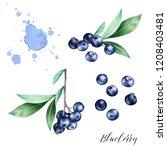hand drawn  set  of blueberries ... | Shutterstock . vector #1208403481