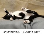 Stock photo black and white cat lying on the back on the couch 1208454394