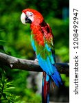 red macaw looking back at you | Shutterstock . vector #1208492947