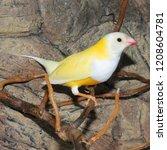 beutiful tropic bird  lady... | Shutterstock . vector #1208604781