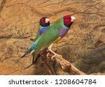 beutiful tropic bird  lady... | Shutterstock . vector #1208604784