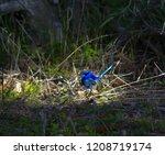 an inquisitive male splendid... | Shutterstock . vector #1208719174