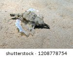 dragonfish   pegasidae  ... | Shutterstock . vector #1208778754