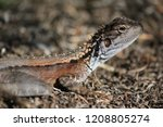lizard in australia outback... | Shutterstock . vector #1208805274