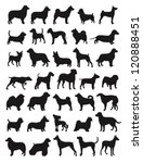 many dog species in silhouettes | Shutterstock .eps vector #120888451