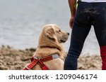 rescue dog  training for the... | Shutterstock . vector #1209046174