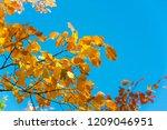 Autumn Landscape  Autumn Leave...