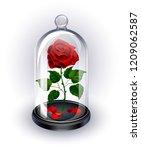 red  eternal rose under...   Shutterstock . vector #1209062587