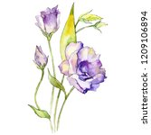 watercolor purple eustoma... | Shutterstock . vector #1209106894