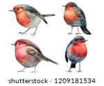 Set Of Robin Birds On An...