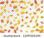 oak  maple  wild ash rowan... | Shutterstock .eps vector #1209203104