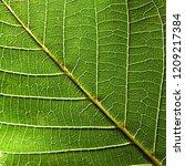 macro photo of veined green... | Shutterstock . vector #1209217384