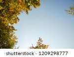 Autumn Or Fall Trees From...