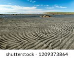 litoral  lat.litoralis   ... | Shutterstock . vector #1209373864