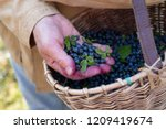 male hands with fresh ripe... | Shutterstock . vector #1209419674