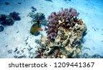 underwater life in egipt | Shutterstock . vector #1209441367