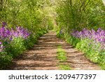 Trail In A Forest With Violets...