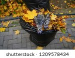 two full garbage bags with... | Shutterstock . vector #1209578434